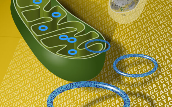 Friedreich's Ataxia: How Frataxin can fluctuate the mitochondrial biogenesis?