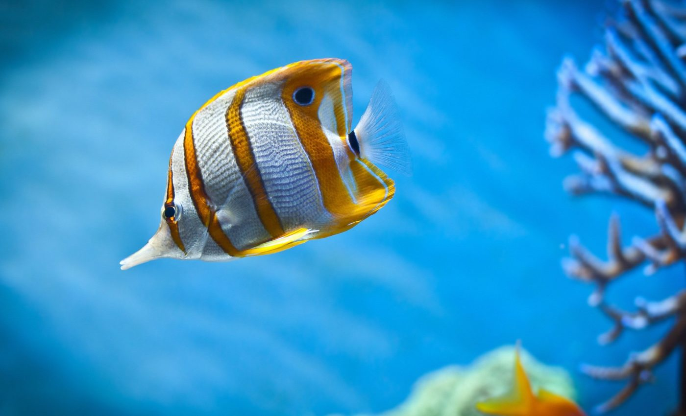 Humans are more related to fish than once thought