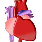 Scientist isolate a protein that could trigger the human heart regeneration
